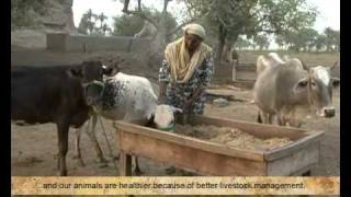 Oxfam - Dairy Sector in Pakistan