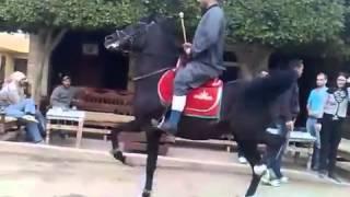 حسن مهران رقص حصان عربي اصيل   YouTube 2