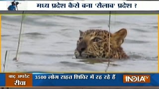 Watch Most Amazing Rescue Operation of Leopard During Flood in MP
