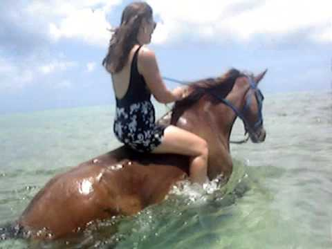 Grand Cayman Island Pampered Ponies Swimming Horses August 2009