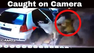 CCTV Footage Of Cow Theft In A Car In Ahemdabad, Gujarat