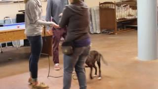Training | Louie Puppy Training | Solid K9 Training Dog Training