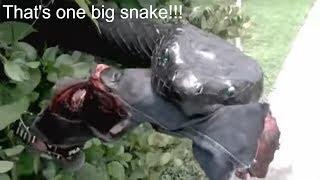 Funniest snake pranks 2017, compilation