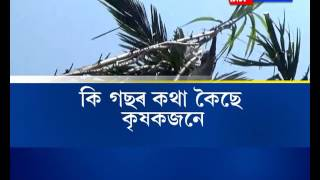 Shocking! Sugarcane grows to a height of 40 ft in Sipajhar in Assam