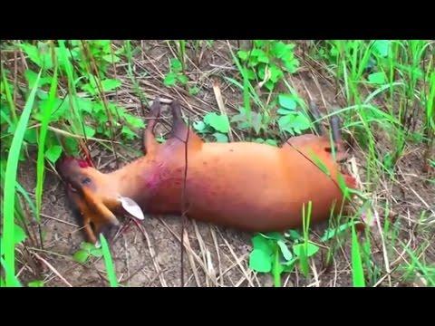 Xxx Mp4 Tribe Hunting Wild Animals Video Horror Animal Hunting Part 2 3gp Sex