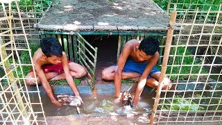 Building Duck House & Swimming Pools For Ducks