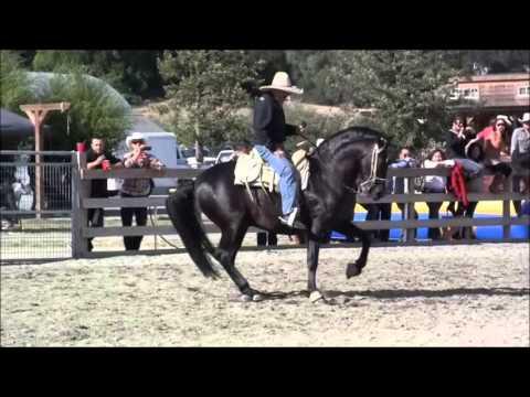 baile de caballos santa rosa epesodio 3