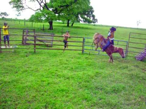Bruno X cavalo loko