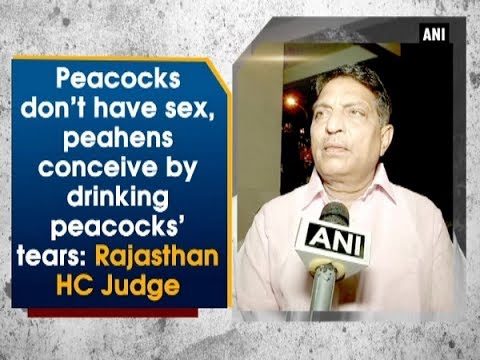 Peacocks don't have sex, peahens conceive by drinking peacocks' tears: Rajasthan HC Judge