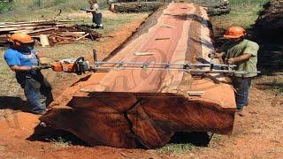 تعرف على طرق تصنيع الأخشاب من الأشجار الضخمة بالتكنولوجيا الحديثة