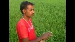 Organic Fertilizer without DAP Urea Part 1