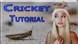 Cricket chirp ~ Beatbox tutorial