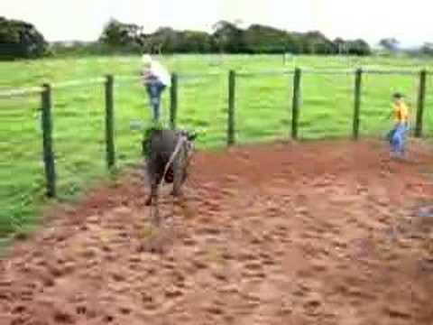 muntaria em touros