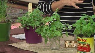 Tips on planting an indoor herb garden