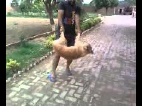 Dog vs Man fucking fight