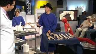 Autopsy Life And Death S01E01 - Circulation