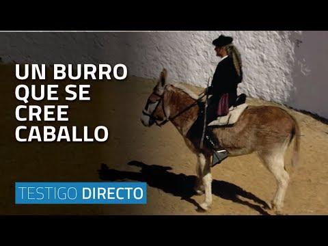 Un burro que se cree caballo Testigo Directo HD