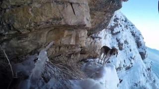 Raw: Dog Rescue Effort in Utah Has Happy Ending