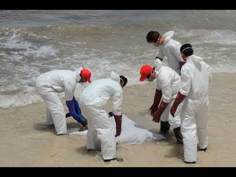 More than 50 bodies were found lying in the coast of Cancun? Explained