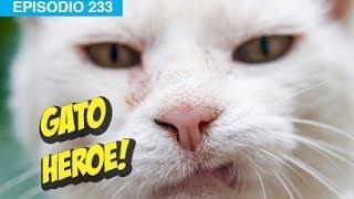 Gato Salva a Niño l whatdafaqshow.com