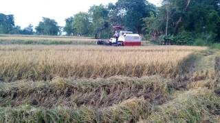 Yanmar harvester india