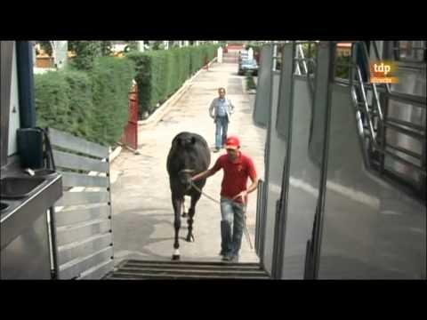 Reportaje Transporte de caballos turf por Maspalomas