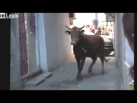 Xxx Mp4 Angry Bull Attacks Traffic Police Funny Video Fail Video 3gp Sex
