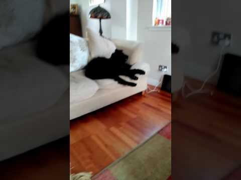 Xxx Mp4 One Tired Dog Xxx 3gp Sex