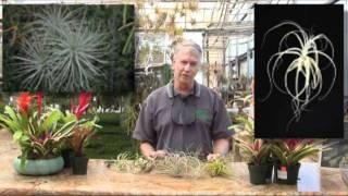 Rainforest Flora Nursery Plant Education 101 - Episode 2