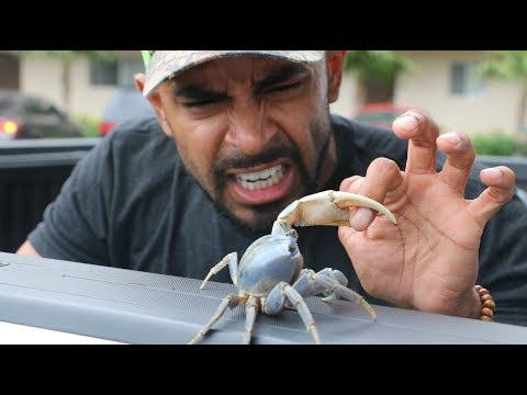 Deadly Mud crab Invade's Miami - catch and cook /w @Monster Mike Fishing  & @CATCH_EM_ALL_FISHING