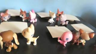 Littlest Pet Shop: Dograssi (Episode 1: First Day of School)