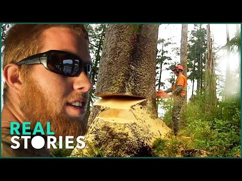 Lumberjack Lives Man Vs. Nature Documentary Real Stories