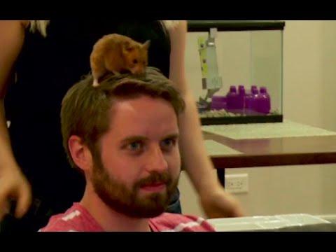 Web Extra She REALLY loves her hamster STEVE HARVEY