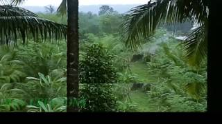 RAIN VIDEO 30S HD 720 P CAPTURED BY MOBILE