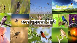 Ore Vorer Pakhi...Bangla Islamic Song...