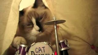 funny cats party