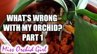 What's wrong with my Orchid? - Top common Orchid problems Part 1