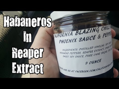 Xxx Mp4 Habaneros In Reaper Extract California Blazing Chile Farms W KBDProductionsTV 3gp Sex