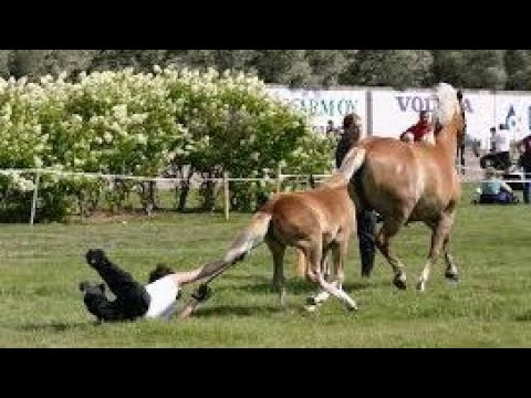 Xxx Mp4 Horses Are Much More Funny Than Cats Funny Horse Videos 2018 3gp Sex