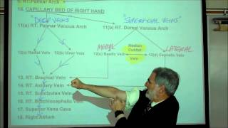 ANATOMY; CIRCULATORY SYSTEM; PART 3 by Professor Fink