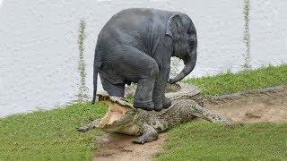 مواجهات غريبة و نادرة بين حيوانات تختتم بنهايات لن تصدقها!