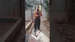 Sehzad bhatti saqlain springer