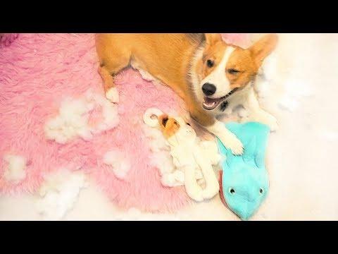 Xxx Mp4 My Dog Destroyed Mr Paws 3gp Sex