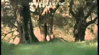 Virgin Territory Trailer 2007