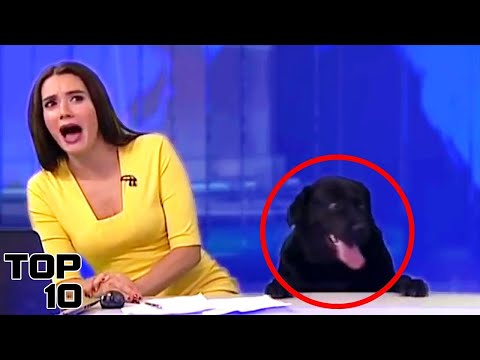 watch Top 10 Live News Reporting Fails
