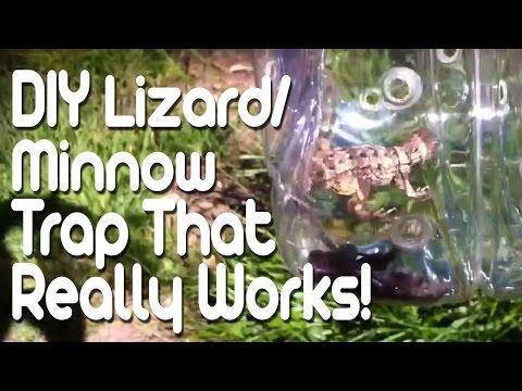 House Lizard Trap Diy Lizard/minnow Trap That