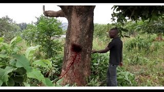 VJ EMMY  SSENTE KYEKI (Part 3) The Sacrifice 3  Anew ugandan movie 2019 Empire movies pro