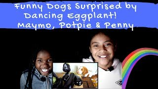 Funny Dogs Surprised by Dancing Eggplant!- REACTION