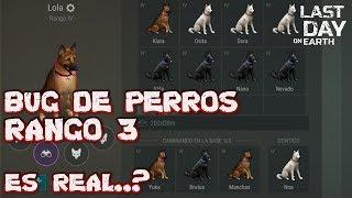EL BUG DE PERROS RANGO 3, ¿ES REAL..? | LAST DAY ON EARTH: SURVIVAL | [RidoMeyer]