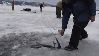 Good day ice fishing with JawJackers.  JAWJACKER VIDEO